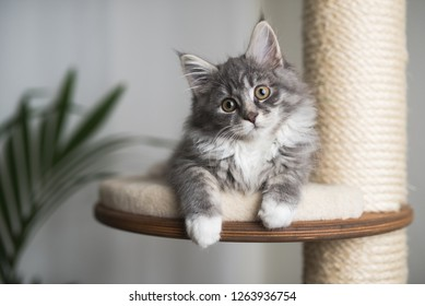 The Coon Images, Stock Photos & Vectors | Shutterstock