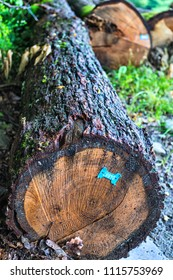 Blue tag on a wet oak log on the ground