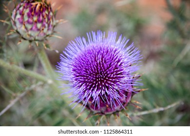 Blue thistle flower in detail with a blurred background