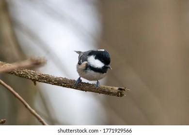 blue tit on a branch near the bird feeder