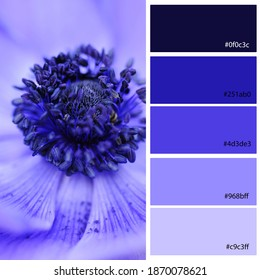 Blue Tones Hues Designer Pack Color Palette inspired by nature. Macro close up Spring bulb Blue Anemone poppy flower. Designer pack with photograph and swatches with hex codes references.