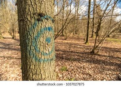 Blue traget painted on an oak tree - Woodland Oxfordshire - UK