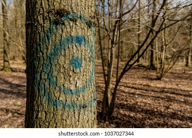 A blue traget painted on a tree trunk - Woodland Oxfordshire - UK