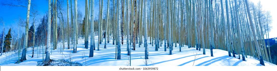 Blue trees panorama