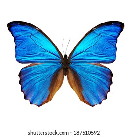Blue tropical butterfly