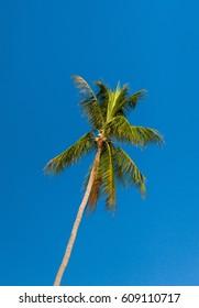 Blue View Azure Backdrop