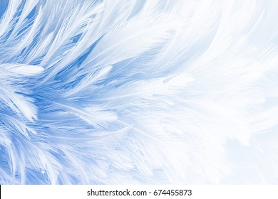 Blue vintage color feather texture background