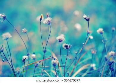 Blue vintage herbal field