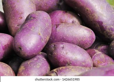 The blue violet potato (Vitelotte)