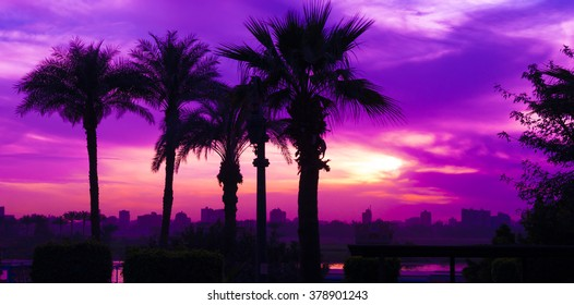 Blue and violet  sunset in Cairo city, Egypt, Nile river shore on evening, dark silhouettes of palms and trees on winter time skyline photo