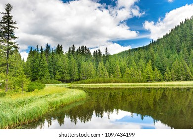 Blue water in a forest lake with pine trees