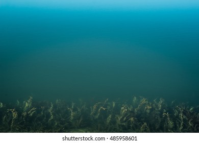 blue water and sea weed in the lake, fish swimming in it