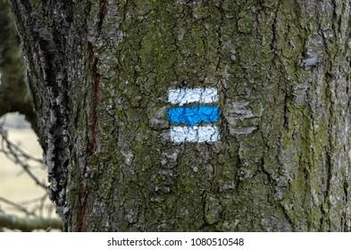 blue way marking on tree