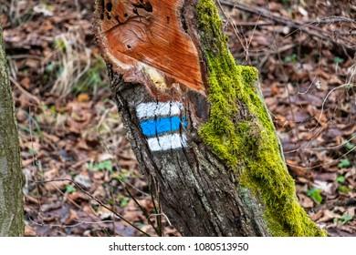 blue way marking on tree trunk