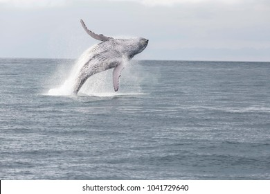 Blue Whale jump secuence