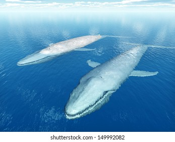 Blue Whales Computer generated 3D illustration