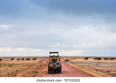 Blue wildebeest herd crossing red dust road in front of safari vehicle.  View to distant salt lake and grey cloud skies,  Ngorongoro National Park, Tanzania, Africa