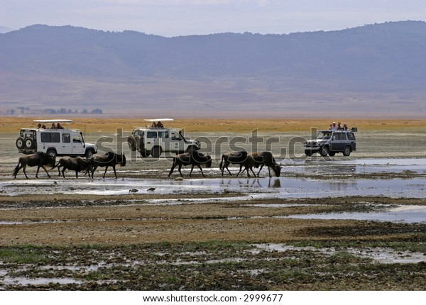 Blue Wildebeest and Safari Trucks