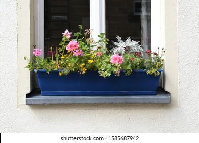 Blue Window Box with Flowers & PLants