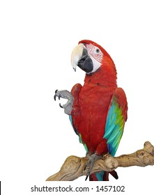 Blue Wing Red Macaw - Take my Four, and Give me Five!