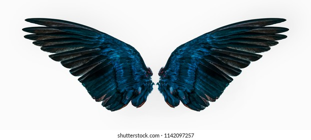 blue wings on white background - Shutterstock ID 1142097257