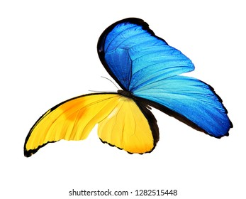 blue and yellow butterfly isolated on white background