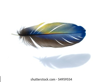 Blue yellow Macaw feather isolated