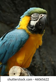 Blue and yellow macaw on a tree branch
