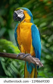 A blue and yellow maccaw