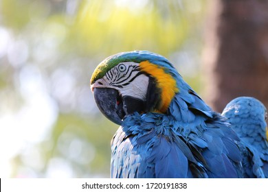 Blue yellow parrot macaw on sitting on a branch
