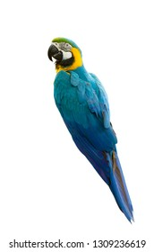 Blue-and-yellow macaw isolated on white background