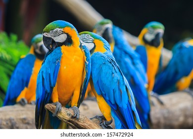 Blue-and-yellow macaw sitting on log