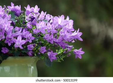 bluebell flowers in pot