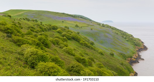Bluebells on Brean Down Somerset in the spring near Weston-Super-Mare