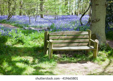 Bluebells in the woods, East Sussex, England, selective focus