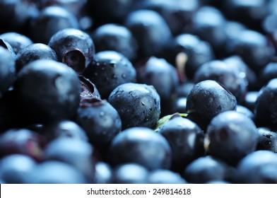 Blueberries close-up. Diverse focus.