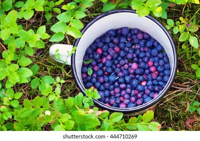 Blueberries in the cup.