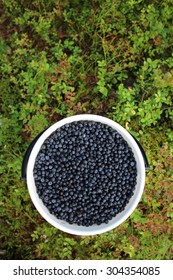 Blueberries in plastic bucket in forest