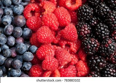 Blueberries, raspberries and blackberries in line together.