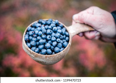 Blueberries in traditional wooden cup hold in woman hand, Lapland, Finland
