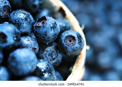 Blueberry antioxidant organic superfood in a basket concept for healthy and nutrition.