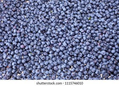 Blueberry as the background