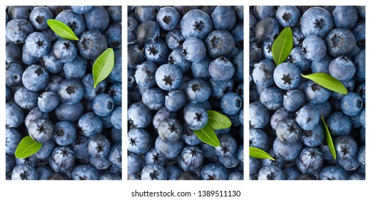 blueberry, clipping path, isolated on white background, full depth of field, high quality