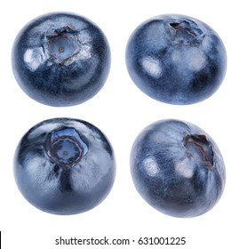 Blueberry collection and juicy fresh picked blueberries isolated on white background