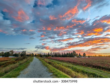 Blueberry farm and path with dramatic sunset clouds