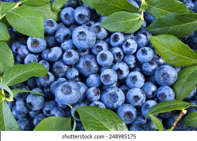 Blueberry, fruit as a background