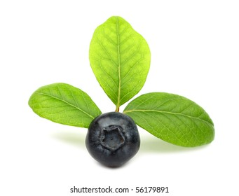 Blueberry with green leaves