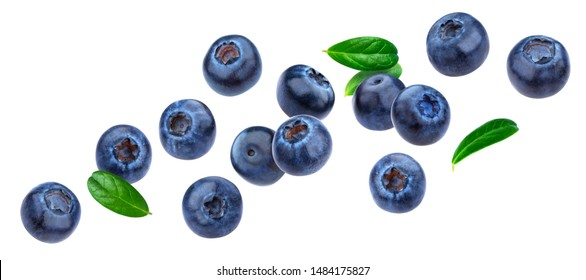 Blueberry isolated on white background with clipping path, berry collection, fresh falling blueberries with leaves