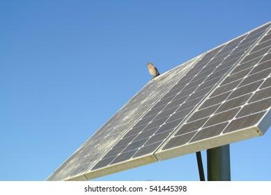 bluebird on a solar panel