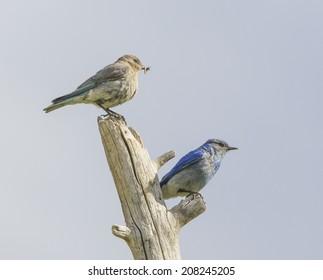 Colorado Birds Images, Stock Photos & Vectors   Shutterstock